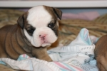 Title: Bertha Bacon 4 Weeks Old