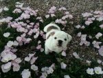 Nicky in the flowers