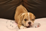 Title:Baby Abby 6 Weeks Old Views:463