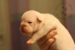 Baby Linus 2 Weeks Old