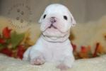 Baby Linus 4 Weeks Old