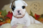 Title: Baby Lucy 4 Weeks Old