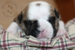 Title:Burrito Bruce 2 Weeks Old Views:395