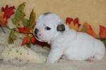 Title:Baby Samson 4 Weeks Old Views:105