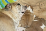 Title: Molly snuggling with her babies