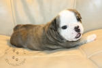 Title:Snickers 4 Weeks Old Views:448