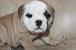 Title:Baby Orion 6 Weeks Old Views:236