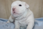 Title: Marshmallow Martin 3 Weeks Old