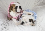 Title:Yuna and Tidus 3 Months in Lou's Hoodies Views:534