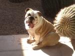 Yuna sitting in a patch of sunbeam